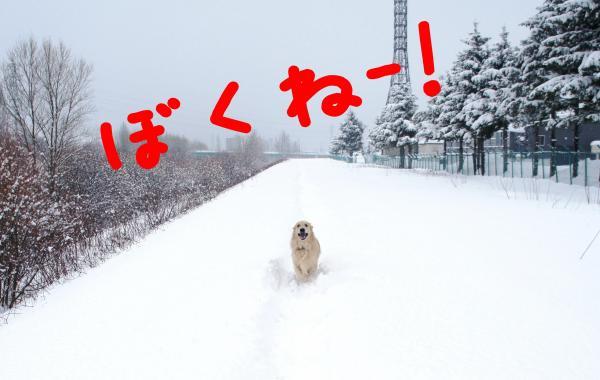 hasiru2_convert_20130105091253.jpg