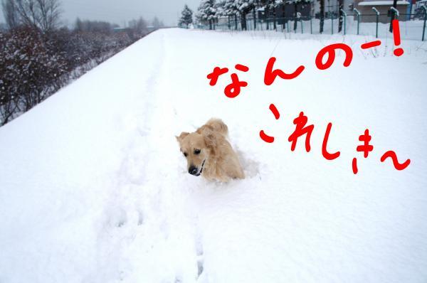 hasiru4_convert_20130105091314.jpg