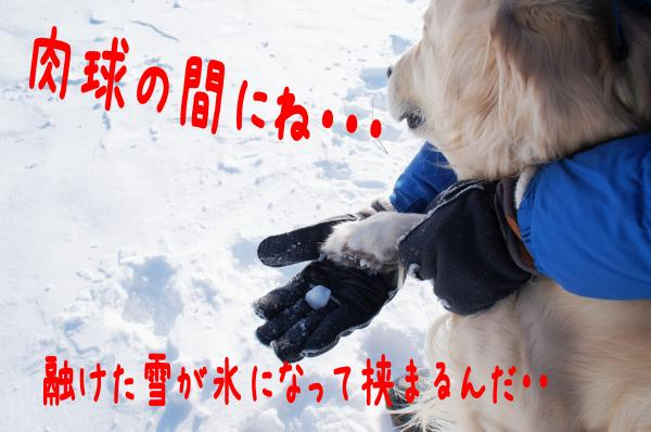 hasiru8_convert_20130105091429.jpg