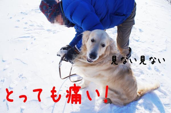 hasiru9_convert_20130105091452.jpg