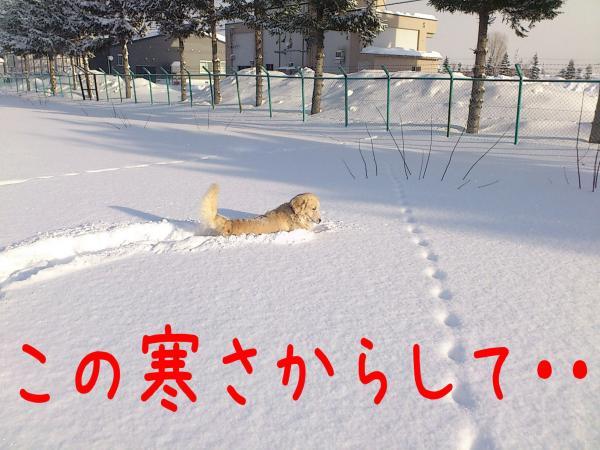 ice2_convert_20130110173426.jpg
