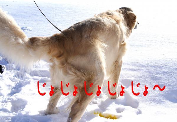ice7_convert_20130110174027.jpg