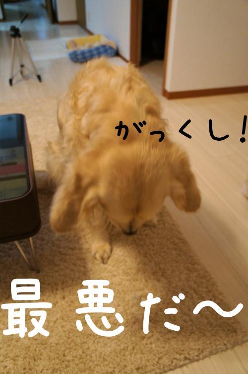 omikuji2_convert_20130117205224.jpg