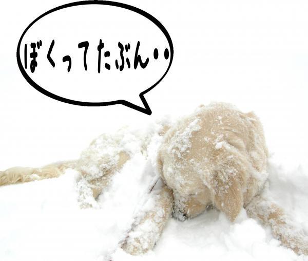 toya5_convert_20121129140115.jpg