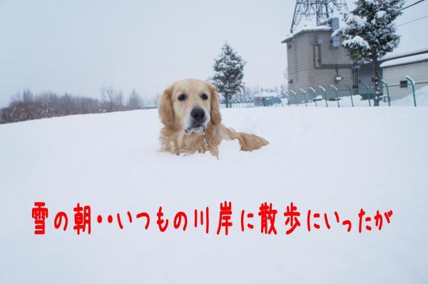 yuki1_convert_20121216231116.jpg