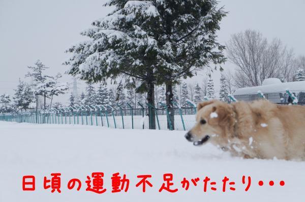 yuki3_convert_20121216231227.jpg