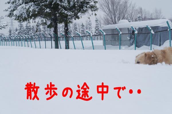 yuki4_convert_20121216231302.jpg