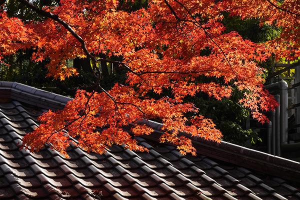 京都 P1100916