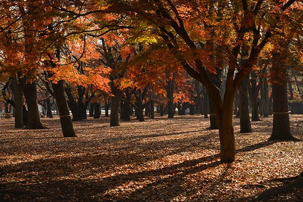 代々木公園800_0803