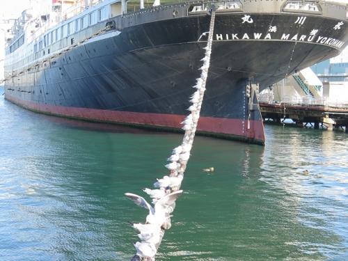 氷川丸とユリカモメ