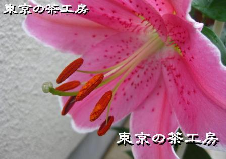 ゆり2012