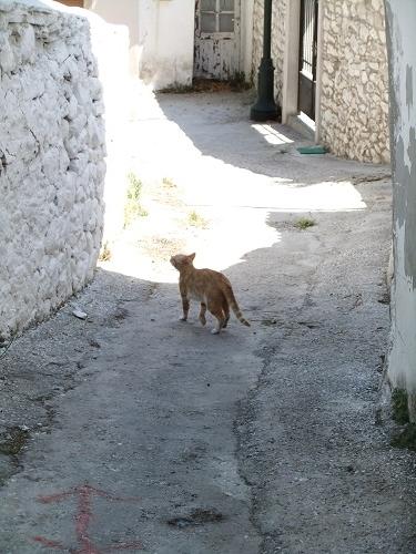 タソス_テオロゴスの猫さん (1)