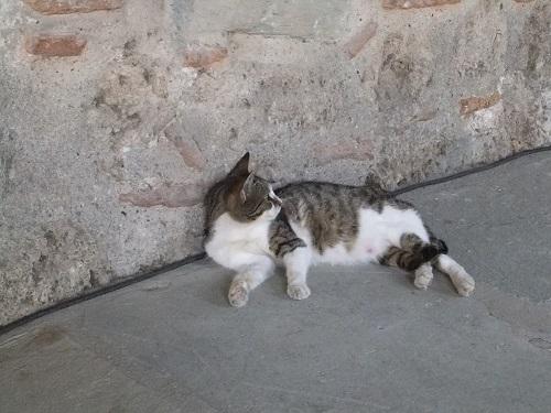 エデッサ_教会の猫さん
