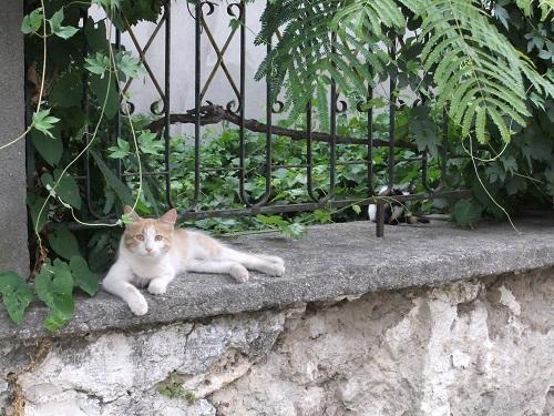 エデッサ_ヴァロシの猫さん (1)