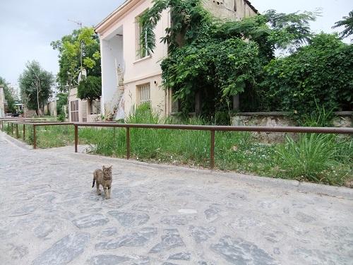 エデッサ_ヴァロシの猫さん (2)