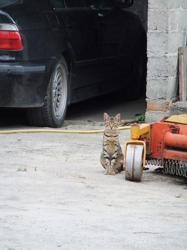 アルニサの猫さん (2)
