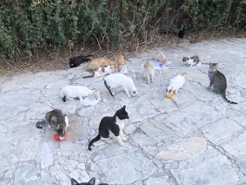 アテネ_猫給食