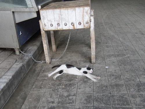 アテネ_中央市場の猫さん (2)