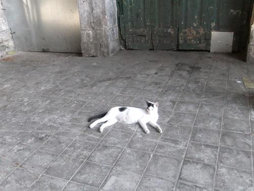 アテネ_中央市場の猫さん (3)