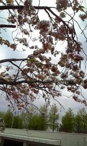 五月の花4