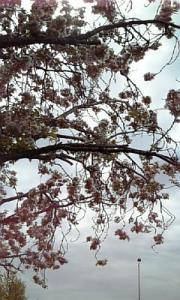 五月の花5