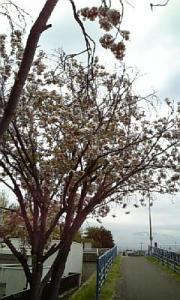 五月の花10