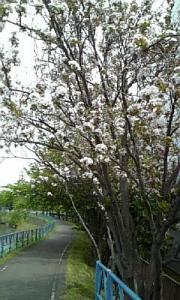 五月の歩道3