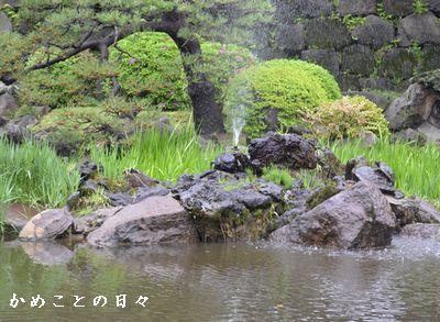 DSC_0067-hika.jpg