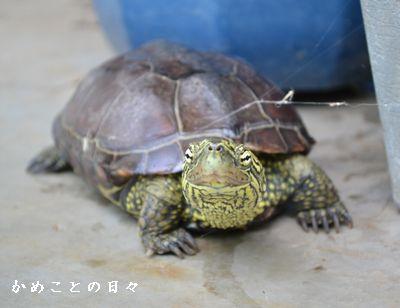 DSC_0086-suke.jpg