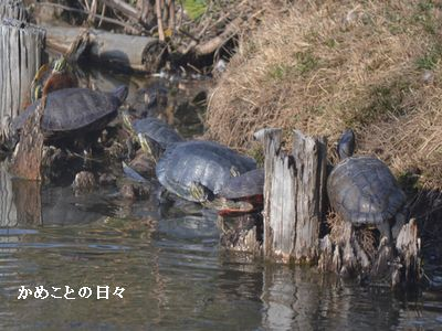 DSC_0089-kame.jpg