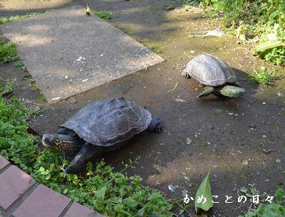 DSC_0099-sukeco.jpg