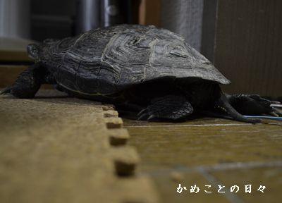 DSC_0105-co.jpg