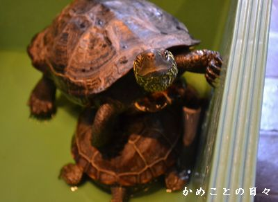 DSC_0114-sukeco.jpg