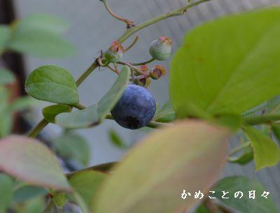 DSC_0122-blu.jpg