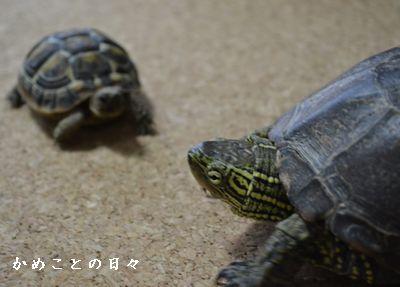 DSC_0198-suke_20130620211334.jpg