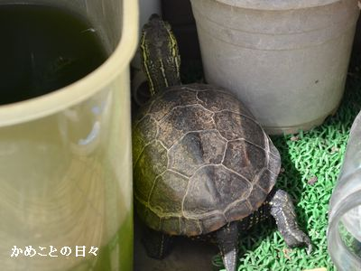 DSC_0204-kamesuke.jpg