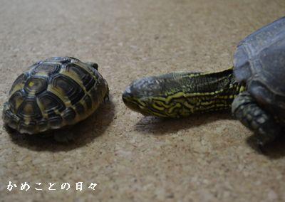 DSC_0204-suke.jpg