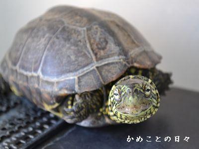 DSC_0243-suke.jpg