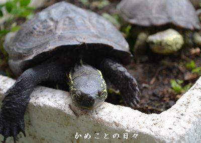 DSC_0245-sukeco.jpg