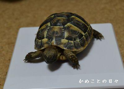 DSC_0247-fu.jpg