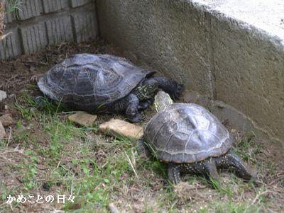 DSC_0295-cosuke.jpg