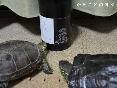 DSC_0325-sukeco.jpg