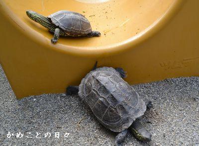 DSC_0339-sukeco.jpg