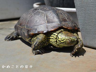 DSC_0345-suke1.jpg
