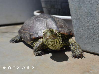 DSC_0347-suke1.jpg