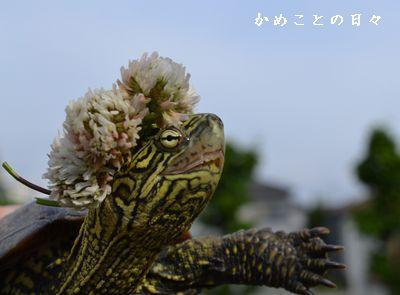 DSC_0409-suke.jpg