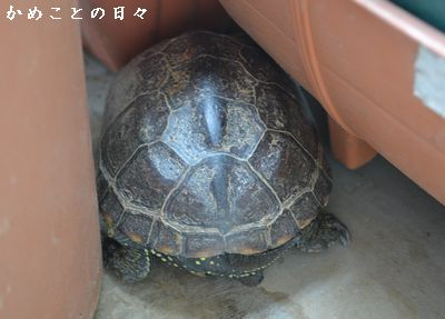 DSC_0499-suke.jpg