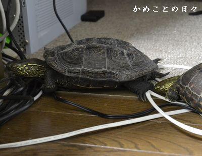 DSC_0537-sukeco.jpg