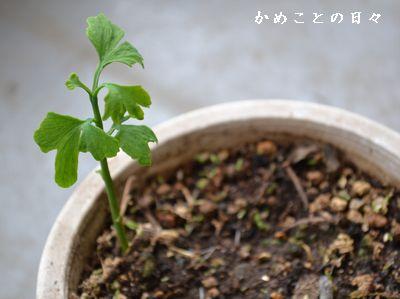 DSC_0565-ki.jpg