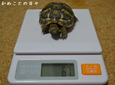 DSC_0589-fu.jpg
